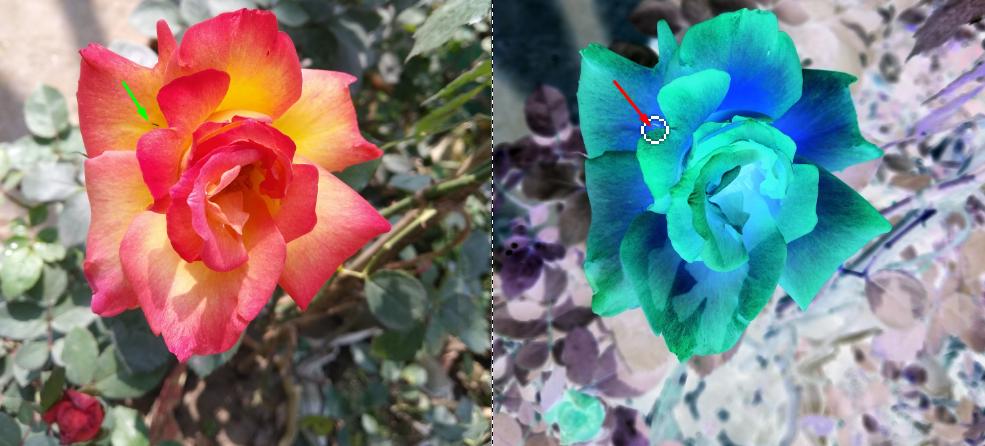 flower photo editing service